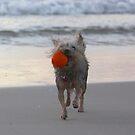 Great Catch! by Diana Grunwald