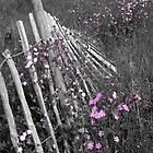 Fallen Fence by StephenRB