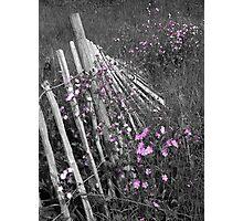 Fallen Fence Photographic Print