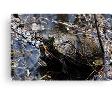 Turtle Rising Canvas Print