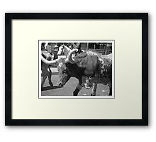 Fort Worth Stock Yards 6 --  The Drive #2 Framed Print