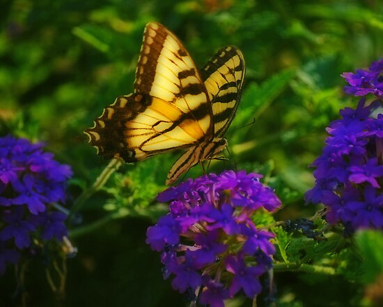 Yellow Swallowtail by mnkreations