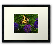 Yellow Swallowtail Framed Print