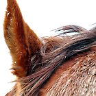horse head close up by hebeluna
