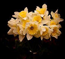 Daffodils  by Dawn OConnor
