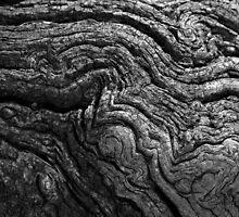 Wood Bark by stephen foote