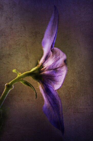 *deep purple* by funkymarmalade