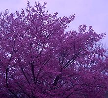 Pink Tree and Lavendar Skies by ArtistJD