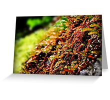 Where the Red Fern Grows Greeting Card