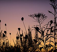 Heaven in a Wild Flower by imagesbylori
