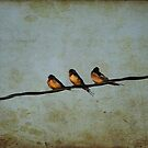 Three On A Wire by Vickie Emms