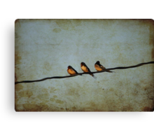 Three On A Wire Canvas Print