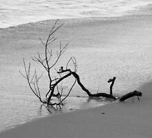 Branch on the Beach by Copperhobnob
