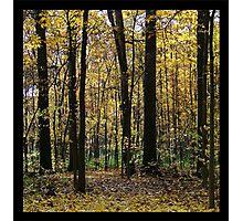 Lillie Park Woods Photographic Print