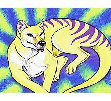 Thylacine Photographic Print