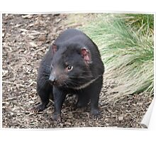 Please don't fade away - Tasmanian Devil Poster