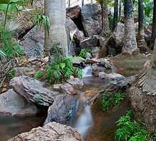 Zebedee Springs - El Questro Wilderness Park by Stephen Colquitt