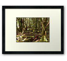 Green forest undergrowth - Tasmania Framed Print