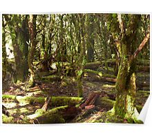 Green forest undergrowth - Tasmania Poster