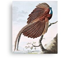 Argus Pheasant Bird Painting Canvas Print