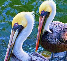 Pelicans By the Sea by Julie Everhart