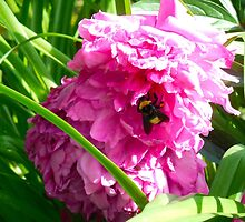 Little Bumble Bee by BrittaniRose