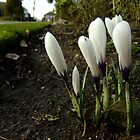 Spring in the suburbs of London by Themis