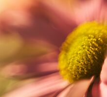 Blurred Vision by Sid Black