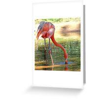 Pink Flamingo Yard Decorations Greeting Card