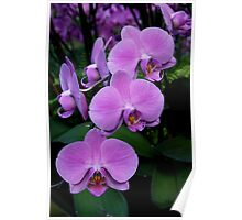 Tropical Orchids   Poster