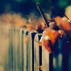 Fence No.2 by Sid Black