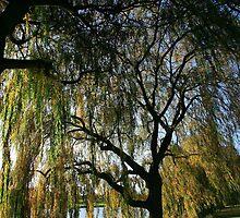 Autumn Willow by John Gaffen
