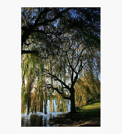 Autumn Willow Photographic Print
