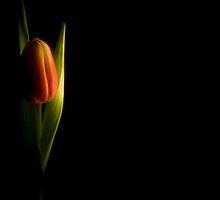 Shine On Me by Sid Black