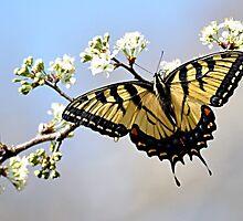 Flutter by licoricetea