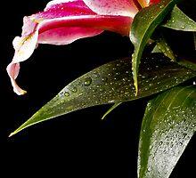 Painted Rain Series - Stargazer 1 by Sandra Wicklund