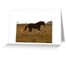 Free to Run Greeting Card