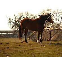 Tall and Majestic by Brenda Dahl