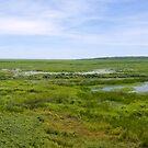 Fogg Dam Wetlands by Adrian Lord