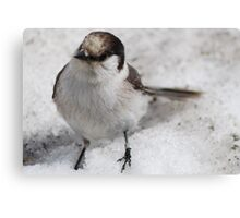 Snow Bird Canvas Print