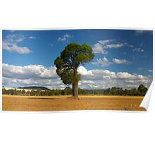 The Bottle Tree- Queensland Australia Poster