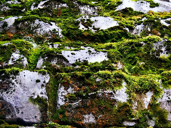 Moss and Stone by shimschoot