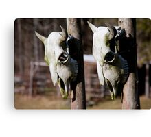 Them Cows Is Dead?? Canvas Print