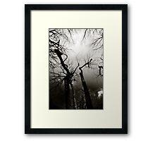 Willow & Sky Framed Print