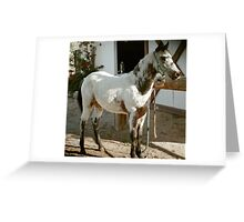 Reno's Chocolate Swirl, a POA filly Greeting Card