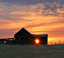 Montana Sunset by Kim Barton
