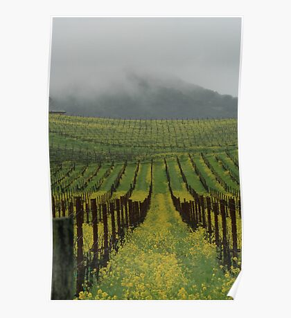Golden hills of Napa Valley Poster