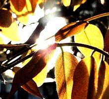 sunny leaves. by jordi2010