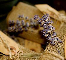 Lavender by dimpdhab