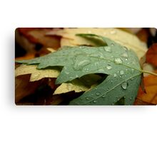 It's Fall in Chico, CA Canvas Print
